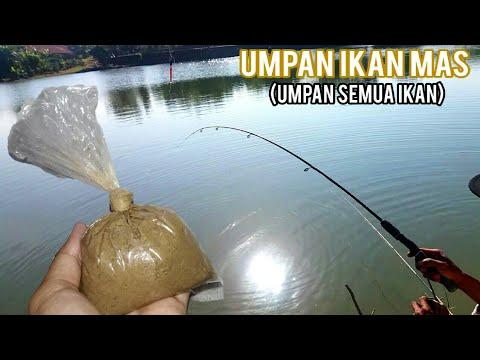 Umpan Super Semua Jenis Ikan (ikan mas dan nila) UMPAN ...
