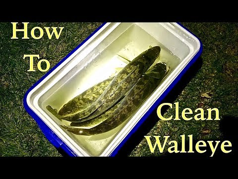 "How to CLEAN a Walleye ""Cheeks included!"" (Filleting a Walleye)"