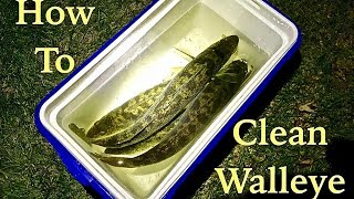 How to CLEAN a Walleye