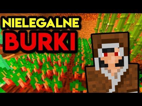 ODKRYLIŚMY TAJNĄ PLANTACJĘ BURAKÓW : Minecraft Classicmc.pl