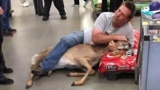 Customer tackles deer in Walmart pet aisle; Oxford student too talented for jail   05/23/2017