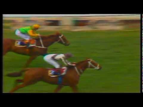 1986 Cox Plate (Bonecrusher vs Our Waverley Star)