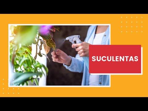 5-dicas-para-manter-as-plantas-em-casa-saudáveis-e-bonitas