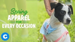 Spring Dog Apparel You and Your Dog Need | Chewy
