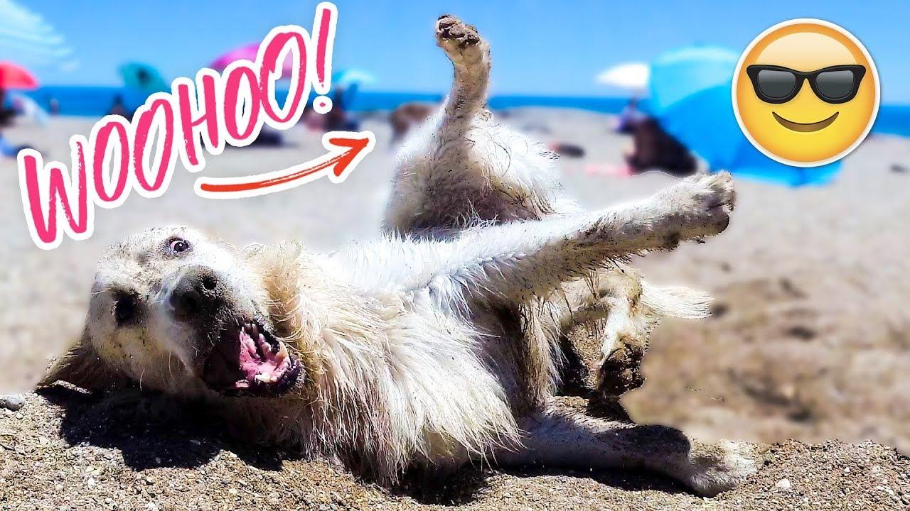 Funny Dog Bailey Beach Day