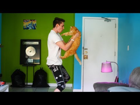 dancing w/ my cats