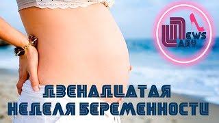 12 неделя беременности: размер плода и ощущения
