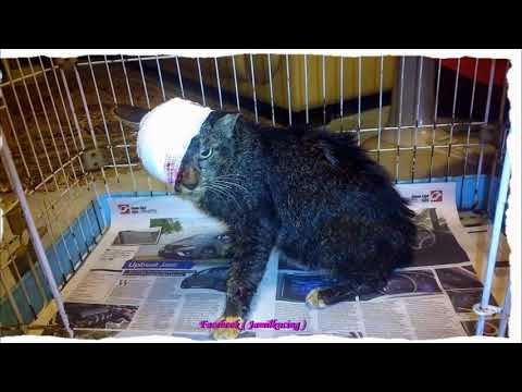 Rescue Injured Cat ON EYE