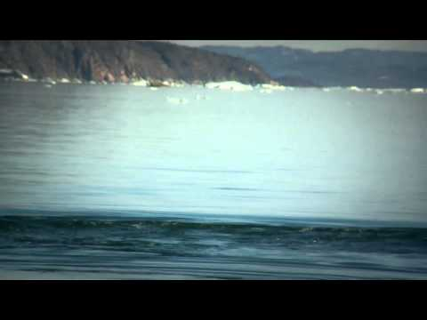 Hvaler i Grønland