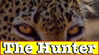 【動物の捕食】恐怖!!チーターがプークーを襲撃する瞬間!ドキュメンタリー動画⑧