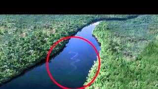GIANT SNAKE IN THE AMAZON RIVER (hd)