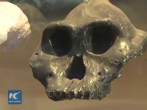 Kenya National Museum captures origin of mankind