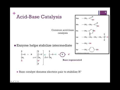 037-Catalytic Mechanisms