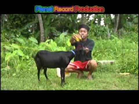Download Buset - Ba Akolai (Lagu Populer Minang)