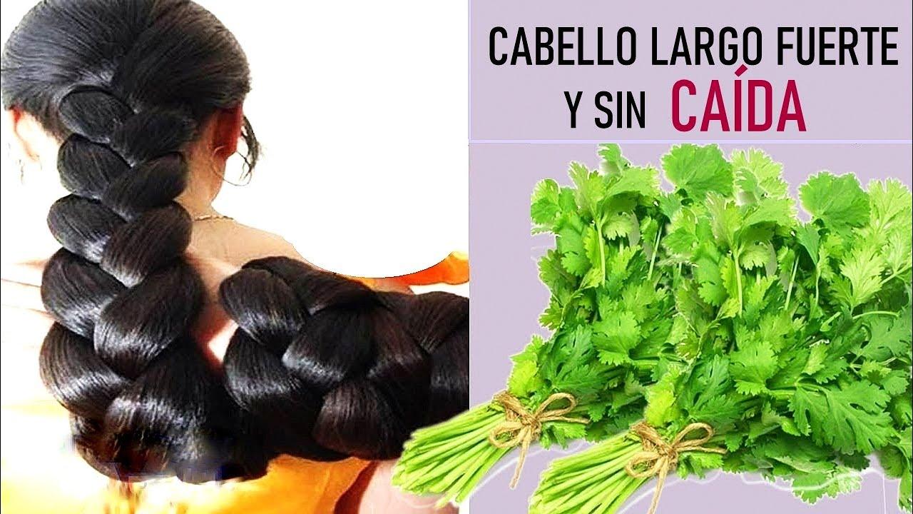BENEFICIOS Y PROPIEDADES DE LAS HOJAS DE CILANTRO EN TU CABELLO!2 recetas fáciles bonitas y baratas🍀