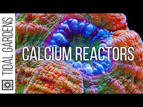 Calcium Reactors Explained