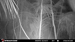 What the TRAILCAM CAPTURED before MISSING 7 DAYS!