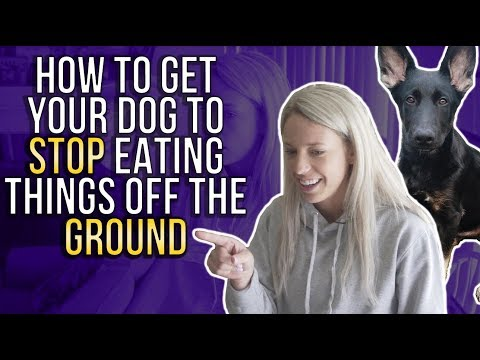HOW TO GET YOUR DOG TO STOP EATING THINGS OFF THE GROUND