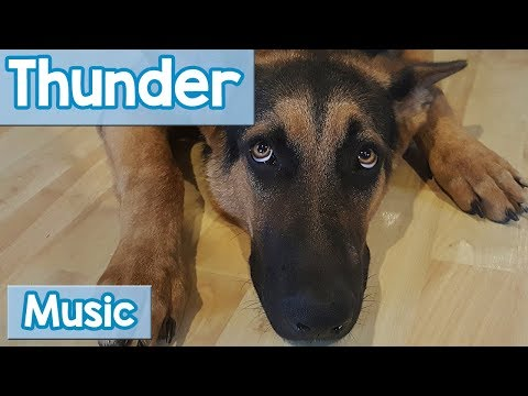 Music For Dogs Scared Of Thunder! Calming Music To Help Dogs Scared Of Thunder, Lightning And Storms