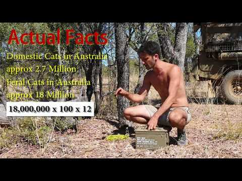 Catching a Feral Cat (Barehanded) with Andrew Ucles