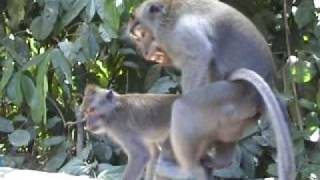 Monkey style - animal love
