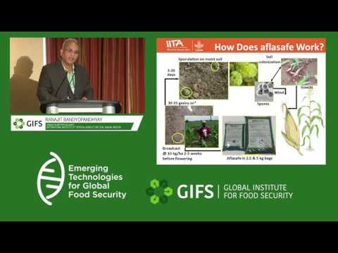 Aflasafe: Development to delivery of an aflatoxin mitigation technology to improve food safety.