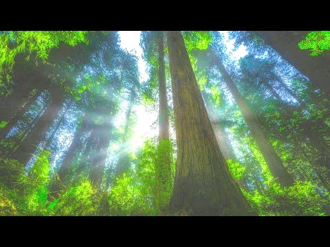 peaceful-relaxing-music-➤-sleep-easy-&-calm-➤-soothing-music-for-meditation,-healing-therapy.