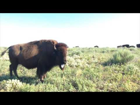 Bison, Baseball and Golf - Get to Know Garden City, Kansas