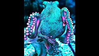 "MARC ALMOND (SOFT CELL) ""THE SEA SAYS"" (1987) OCEAN INVERTEBRATES (BEST HD QUALITY)"