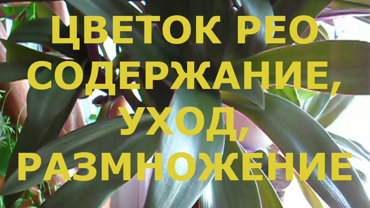 150, 16 rub, купить. Одноклассники ok. Ru +sms (ж) vip акки [26-50 друзей] опт => от 10 шт. 110, 20 rub, купить. Odnoklassniki. Ru sms (новые аккаунты активированы по смс, но уже с отлёжкой 2014-2015 года). Одноклассники ok. Ru +sms (женские) без фото, [отлёжка с 2011г.
