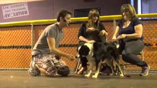 Dog Training 101  How to Train ANY DOG the Basics