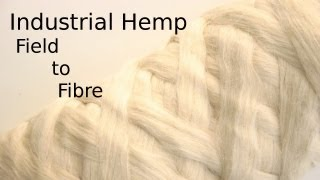 Processing Hemp from the field to textile fibre