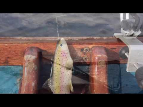 Lough Gowna 2016 Fishing
