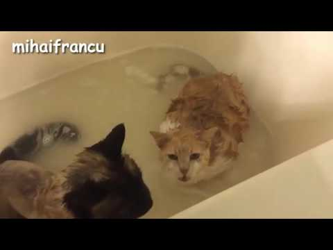 Cats Saying No to Bath   A Funny Cats In Water Compilation