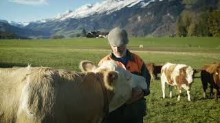 видео Бизнес-завтрак по-швейцарски