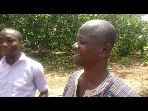 Cashew 2017: visit to Wenchi, Ghana, Africa