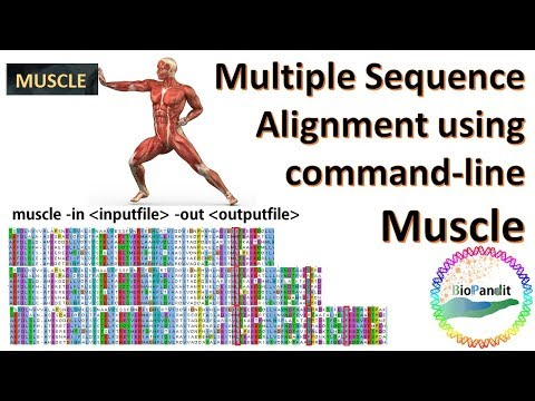 Multiple Sequence Alignment Using MUSCLE