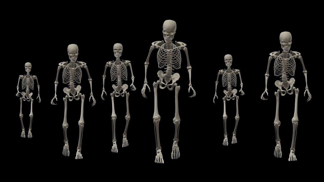 советских времен ходячий скелет фото пишутся серия номер