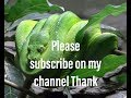 Snak Thank You For Subscribe on my channel