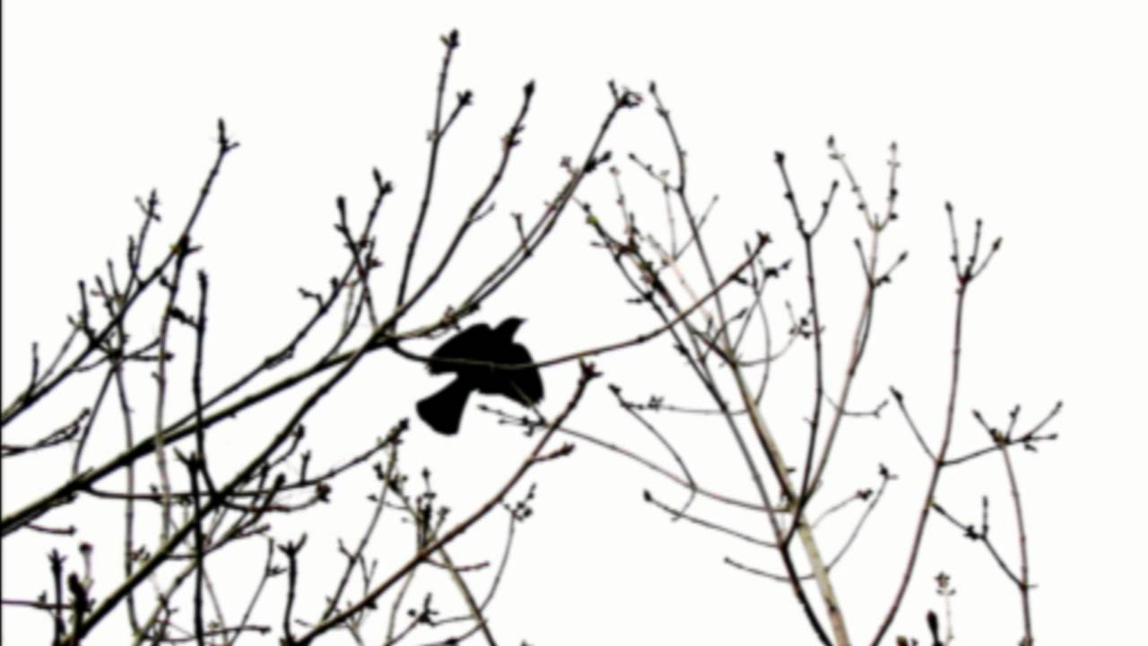 Thirteen Ways Of Looking At A Blackbird Poem by Wallace