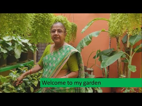 Asha's Garden Bangalore