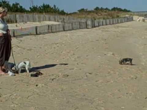 The Dogs On The Beach At Delaware Seashore SP