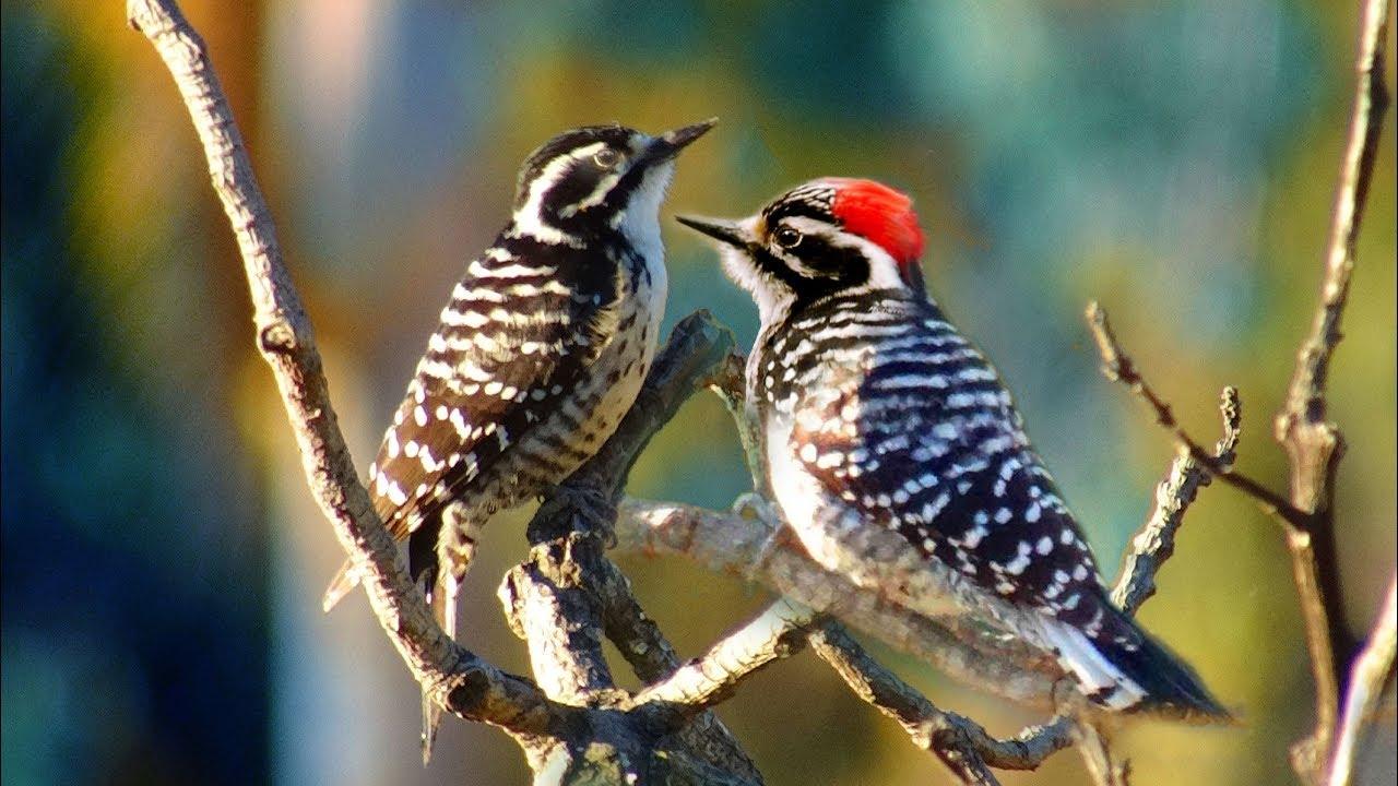 birds in the yard southern california woodpecker robin hummingbird