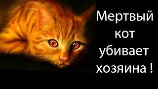 Мертвый кот убивает хозяина