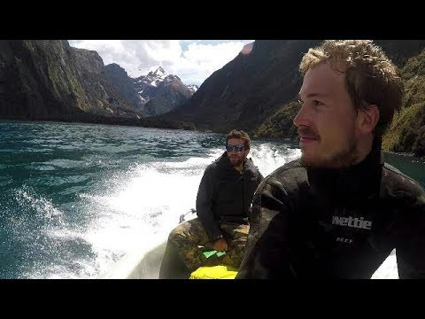 [Part 1] Diving roadtrip to the Catlins, Fiordland (Milford Sound) NZ