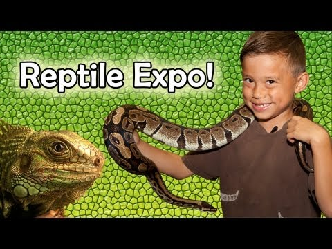 REPTILE SHOW & EXPO 2012! Venomous Snake Display, Geckos, Alligator, Bearded Dragons and more!