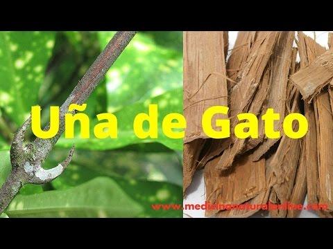 LA UÑA DE GATO –PROSTATITIS, CISTITIS, SINUSITIS, TUMORES CANCEROSOS