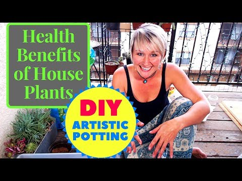 Health Benefits of House Plants & DIY Artistic Potting