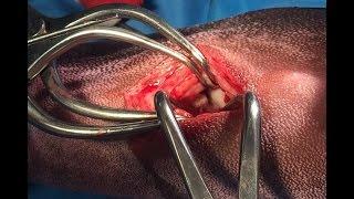 The mini-medial stifle arthrotomy
