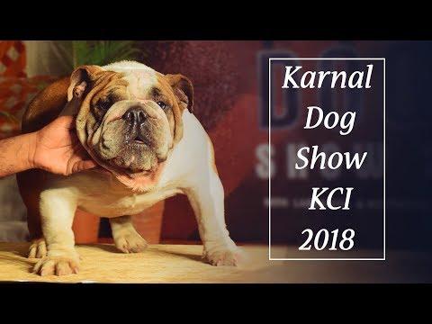 Karnal Dog Show KCI 2018